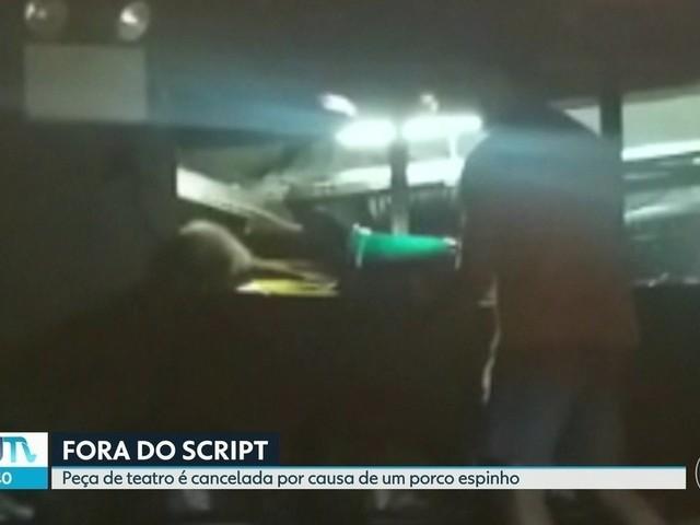 Peça é cancelada após invasão de porco-espinho a teatro na Gávea