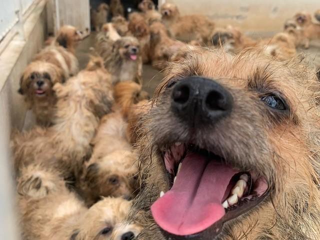 Polícia de Rio Preto apreende 66 cães após denúncia de maus-tratos; veja fotos