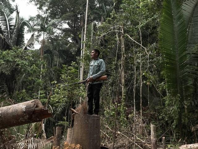 Inpe divulga taxa de desmatamento da Amazônia: índice pode chegar a 10 mil km² em 1 ano