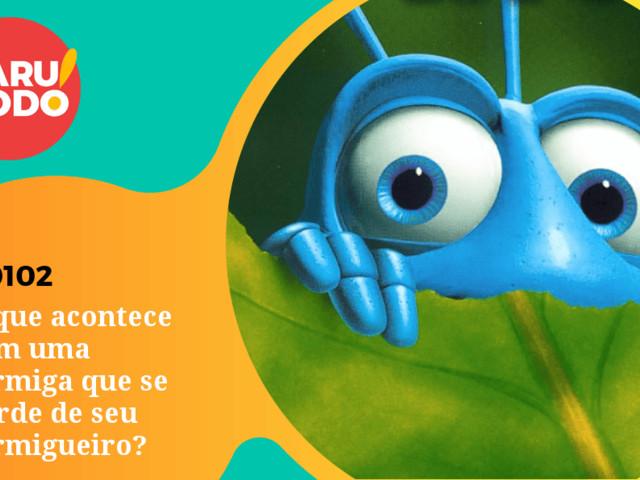 Naruhodo #102 – O que acontece com uma formiga que se perde de seu formigueiro?