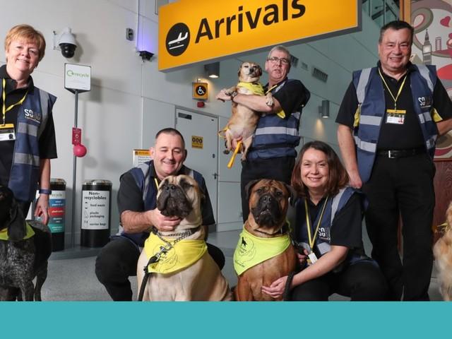 A nova equipa deste aeroporto é canina e só quer acalmar os nervos dos passageiros