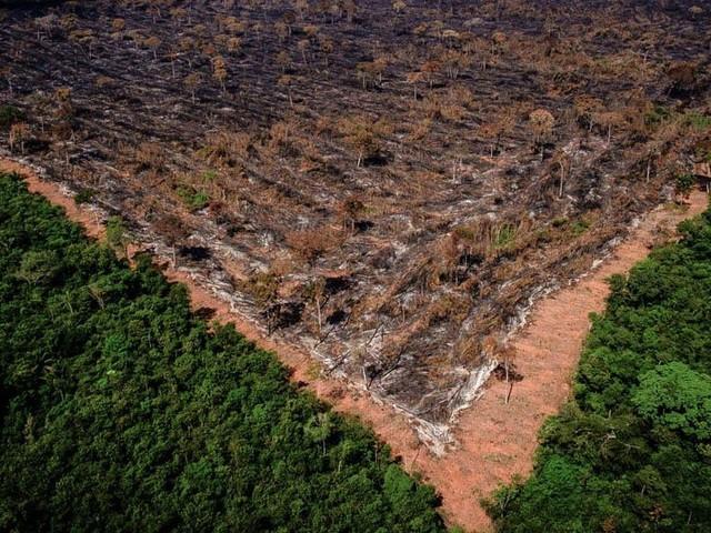 Governo demite coordenadora do desmatamento da Amazônia no Inpe