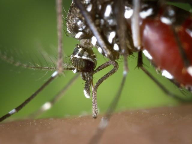 Secretaria de Saúde de Limeira confirma dois casos de dengue tipo 2