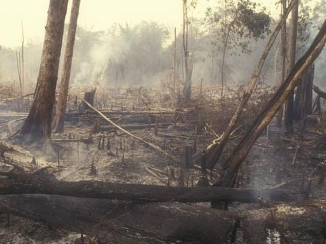 Desmatamento na Amazônia tem tendência de alta no ano; veja 10 motivos de alerta sobre o tema