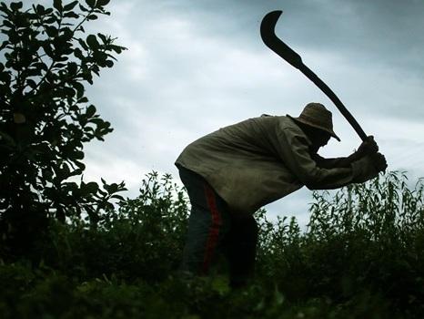 """Governo impede divulgação da """"lista suja"""" do trabalho escravo"""