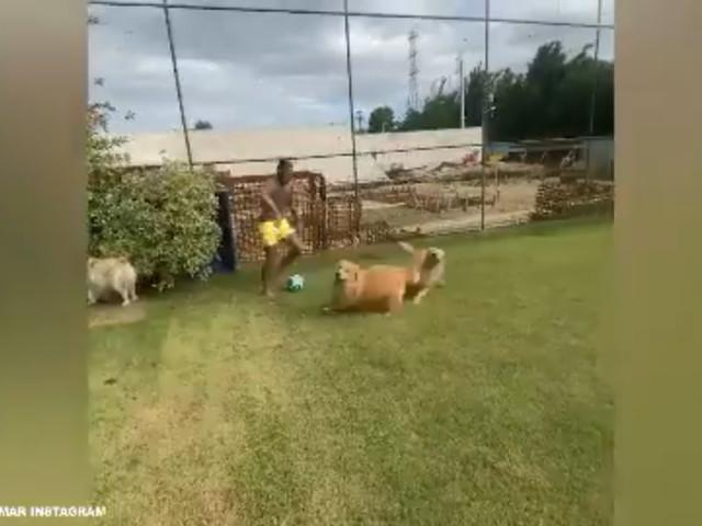 Corre! Neymar mata saudade do futebol se divertindo com cachorros durante quarentena