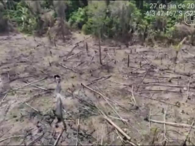 Ibama flagra 76 hectares de desmatamento ilegal na Terra Indígena Koatinemo, no sudoeste do PA
