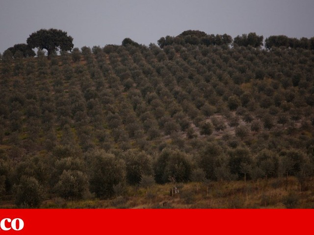 Agricultores pedem mudanças na gestão da água de Alqueva
