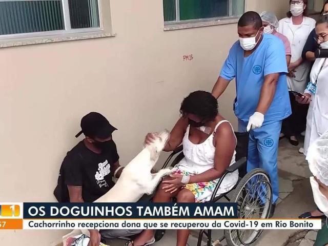 Cachorro entra em ambulância e acompanha transferência de dona internada com Covid-19 no RJ