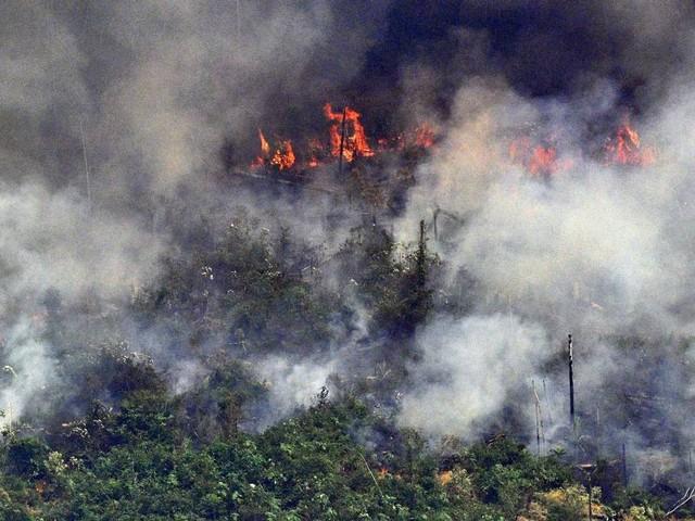 Incêndios na Amazônia podem deixar o Brasil fora da OCDE