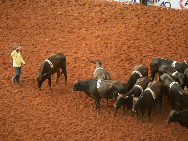 Barretos 2019: finais das montarias em touros e cavalos; FOTOS