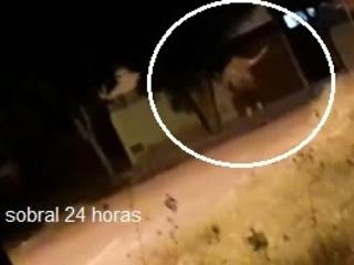 Médico perito surta e tenta se matar com um revólver no bairro Sinhá Sabóia, em Sobral