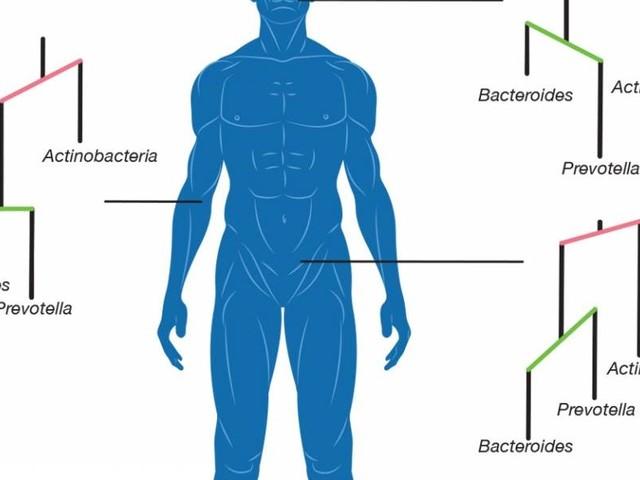 A Evolução microbiana para colonizar diferentes partes do corpo humano