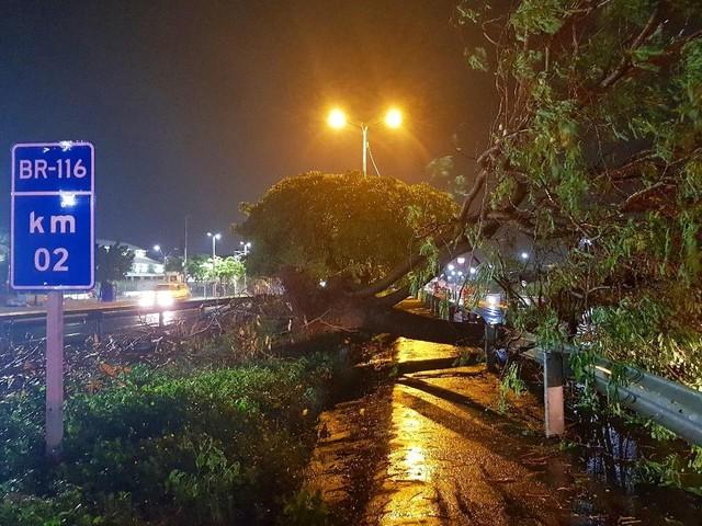 Chuva forte alaga ruas e derruba árvore em Fortaleza