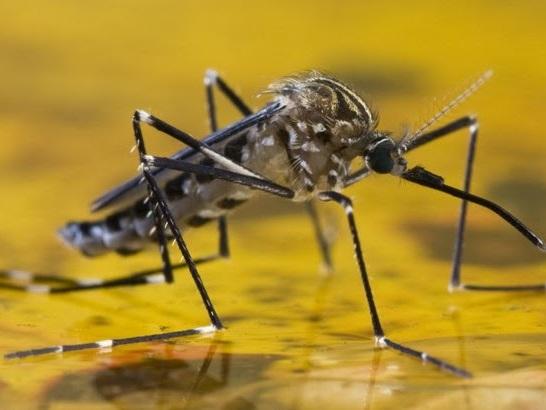 OMS alerta para risco de transmissão urbana da febre amarela no Brasil