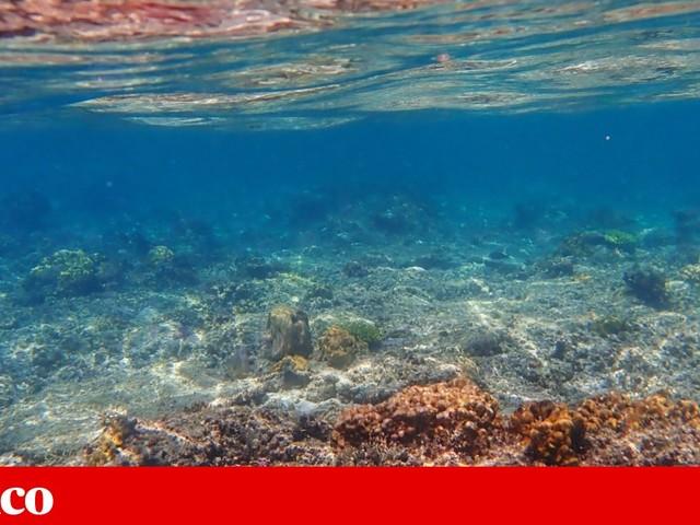 Oceanos nunca foram tão quentes na história humana como em 2019. E aumento da temperatura está a acelerar