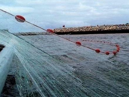 Universidade de Évora colabora na regulamentação da pesca de sável e lampreia-marinha