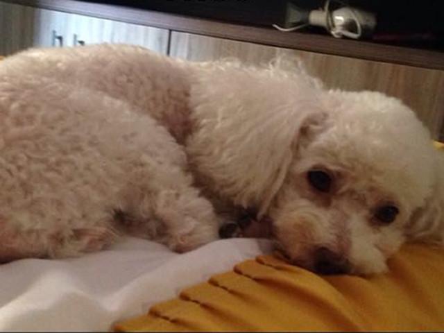 Cão é roubado durante assalto em casa em MT e família oferece recompensa de R$ 1 mil a quem encontrá-lo