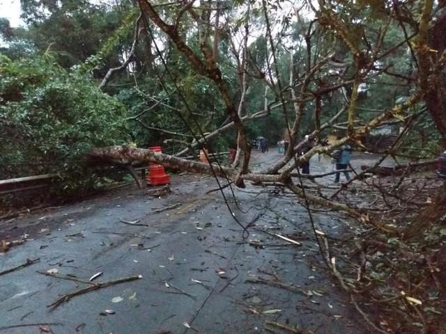 Árvore cai e interdita Estrada do Guaraú em Peruíbe, SP