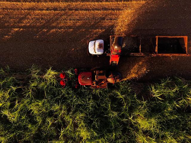 Negociações do agro têm pouco a evoluir entre Estados Unidos e Brasil