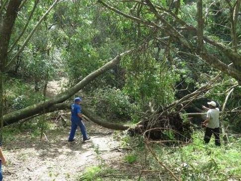 Parque que teve 100 árvores derrubadas pelo temporal reabre neste sábado em Porto Alegre