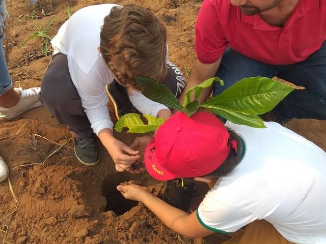 Plantio de 150 mudas de árvores nativas encerra Semana da Árvore em Pederneiras