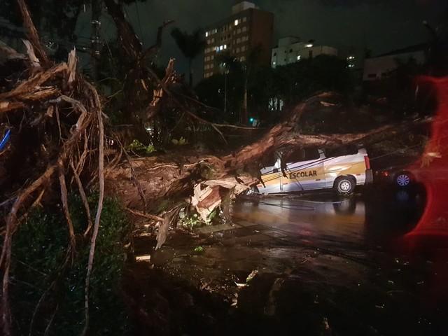 Motorista morre após árvore cair sobre van escolar em avenida da Região Centro-Sul de BH
