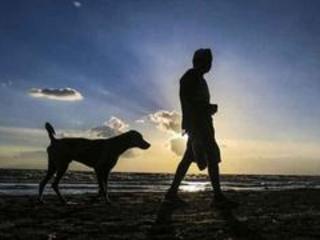 Cães chegaram à América junto dos primeiros humanos, dizem pesquisadores