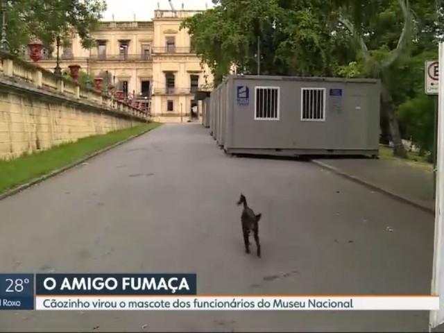 Cão vira mascote do Museu Nacional, no Rio