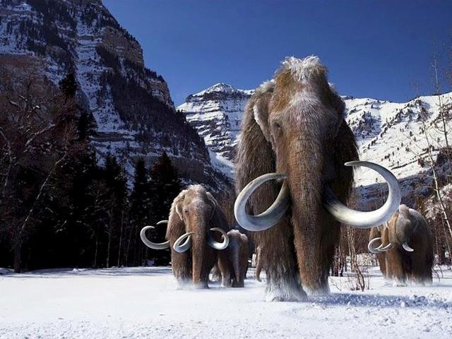Ciência avança para trazer mamute de volta da extinção