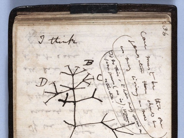 Dois cadernos de Charles Darwin estão desaparecidos há 20 anos