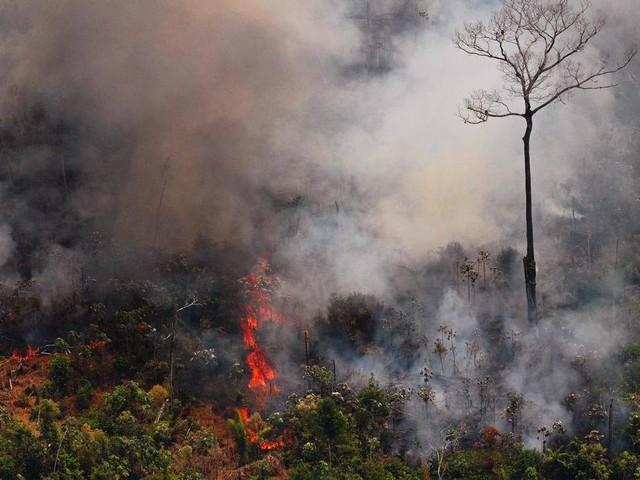 Governo envia circular para embaixadas para orientar conversas sobre Amazônia e desmatamento