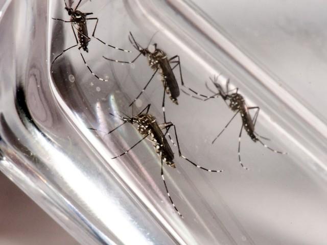 Primeiro boletim de setembro tem novos casos prováveis de dengue em 12 cidades da Zona da Mata e Vertentes