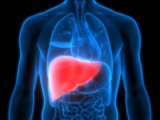 Máquina mantém fígado vivo por até uma semana fora do corpo (e ainda o regenera)
