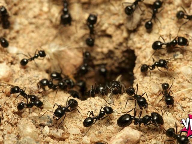 Comportamento individual e agregado: de formigas e homens