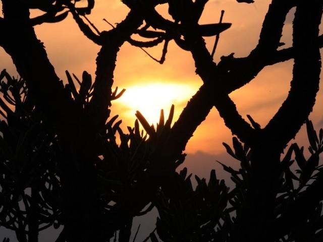 Semana do Cerrado faz ações sobre sustentabilidade em vários pontos do DF