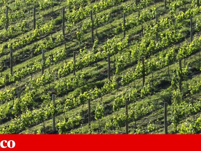 Empresas do vinho do Porto satisfeitas com devolução de diploma sobre Casa do Douro