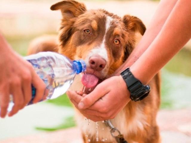 Confira oito cuidados que você deve ter com seu cachorro no verão