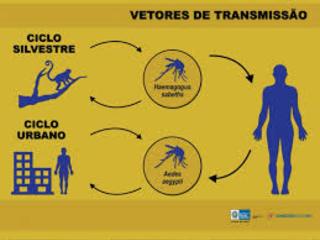 MS declara fim do surto de febre amarela,mas as epizootias continuam ocorrendo no país
