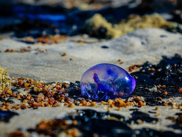 Situação das praias do Nordeste afetadas pelas manchas de óleo