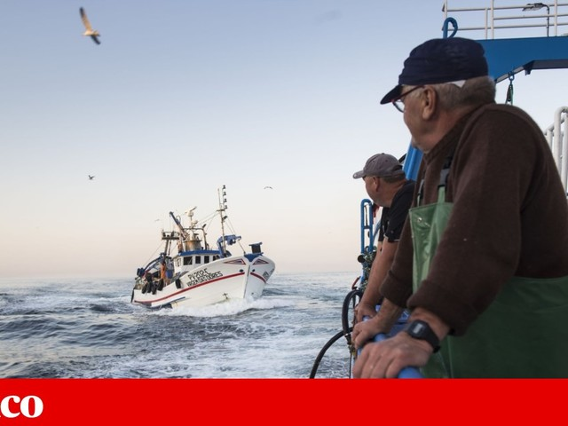 Captura de sardinha diminui 99,5% em Maio