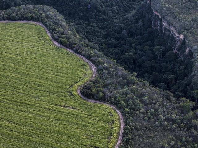 Brasil perdeu 1,4 milhão de hectares de floresta nativa em 2018, diz ONG