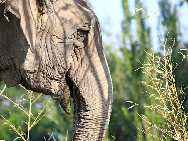Juiz proíbe cobrança de imposto por nova elefanta que vai viver em santuário em Chapada dos Guimarães (MT)