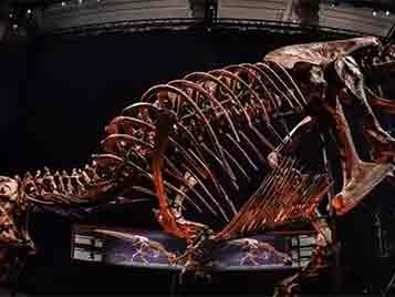 Tiranossauro Rex em Paris por 3 meses