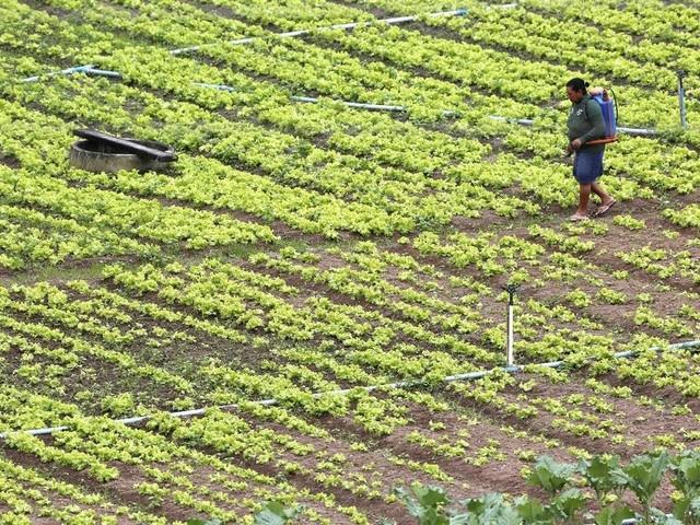 Lewandowski suspende norma do Ministério da Agricultura que permitia uso de agrotóxicos sem estudo prévio