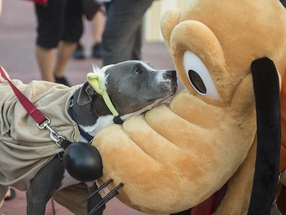Disney passa a permitir entrada de animais em seus hotéis