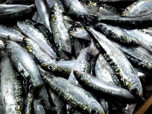 Consumo de sardinha caiu 63% nos últimos cinco anos