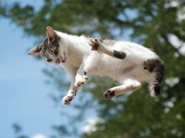 O insolúvel mistério da física: por que os gatos caem sempre de pé?