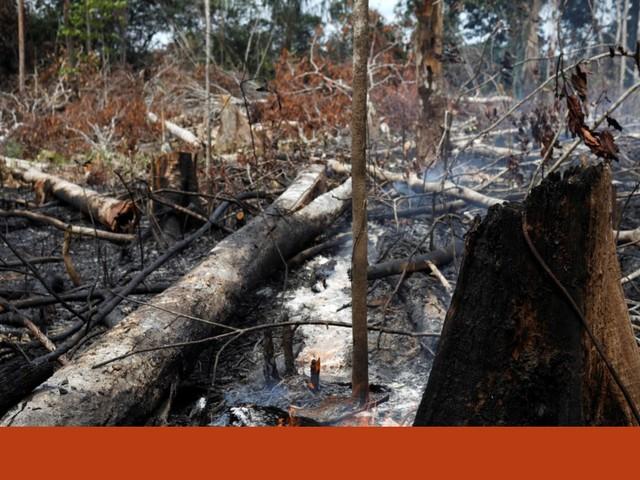A Amazónia está a arder. Como podemos ajudar?