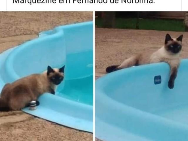 A difícil vida de tutores de felinos